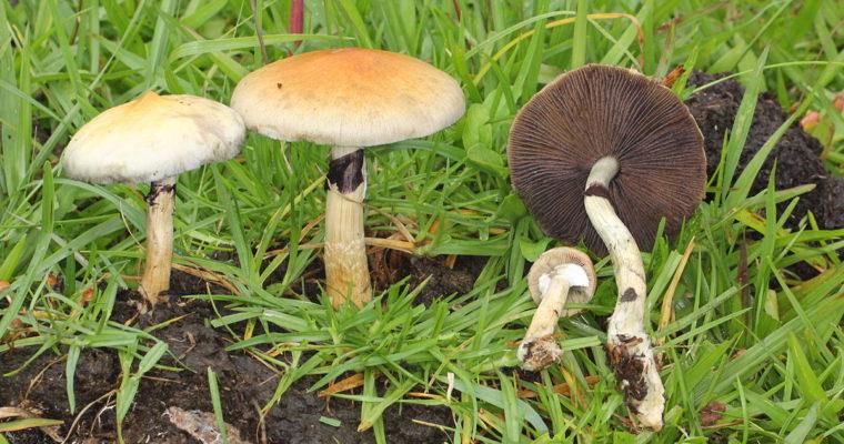 Mushrooms Are Very Good – Dr Sebi