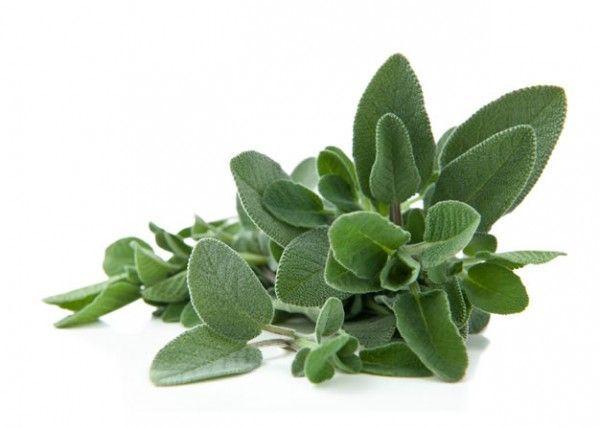 Sage herb - Dr Sebi