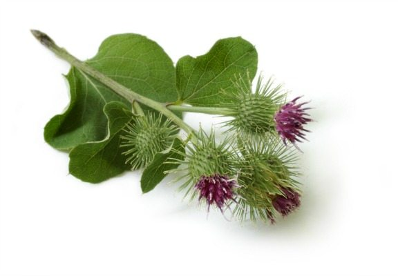 Dr Sebi – God Food Pt. 3 (Environment, Trust, Natural Plants)