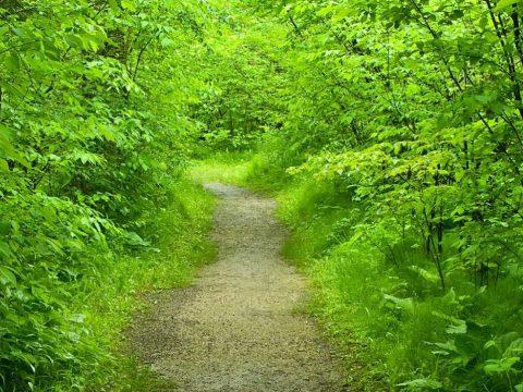 Nature as a healer